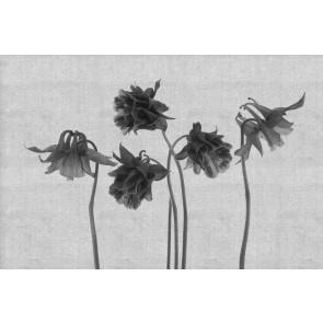 Florale Kunst