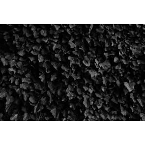 Zwarte Bladeren