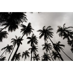 Palmbomen In Zwart En Wit