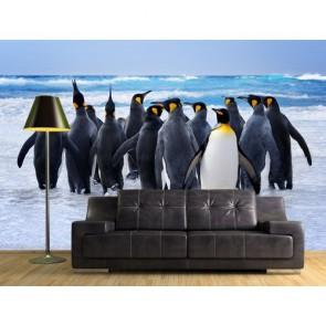 Penguins Fotobehang - Gelijmde