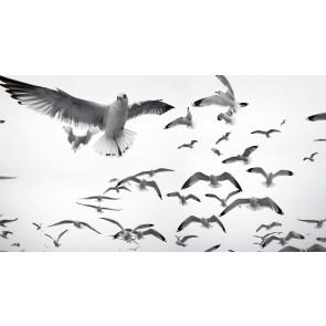 Witte Vogels