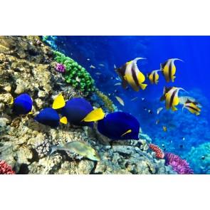 Gele En Marinevissen