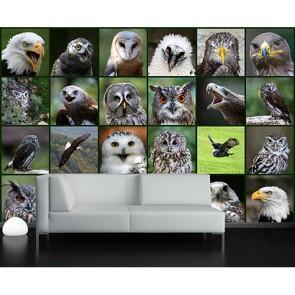 Taal Van De Vogels Fotobehang - Gelijmde