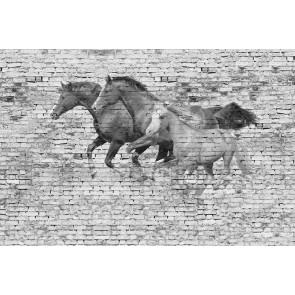 Muur Met Paarden