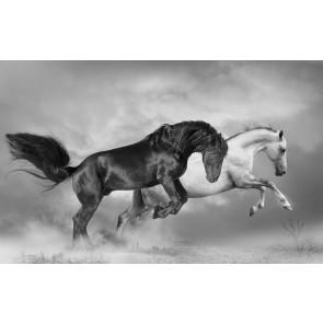 Paarden Grootbrengen