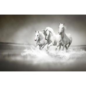Paarden In De Oceaan